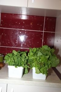caserolele cu salata de la distantaIMG_5397